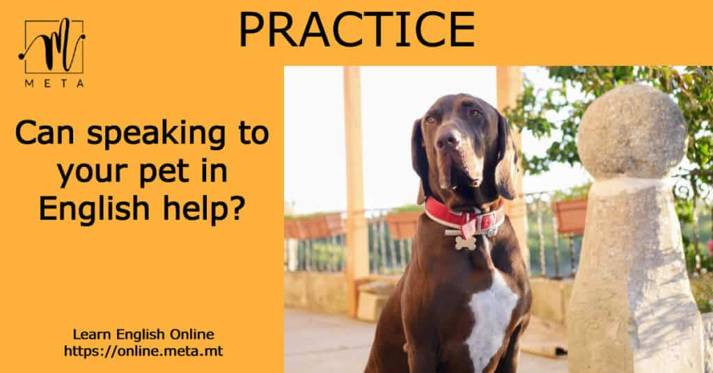 Can speaking to your pet in English help you learn